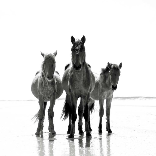 What to read: 'The Wild Horses of Cumberland Island'