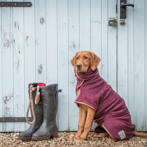 Nine brilliant buys to see your dog through autumn