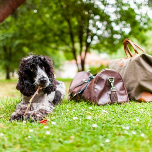 The UK's best dog-friendly hotels