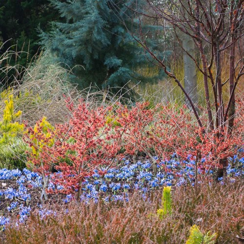 What to book: RHS Early Spring Plant Fair