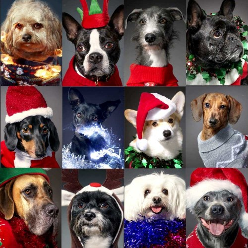 Meet the 12 dogs of Christmas