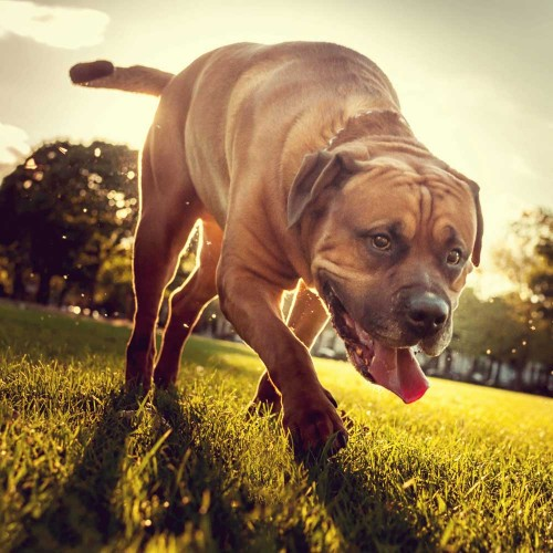 Five ways to keep your dog in shape this summer