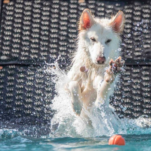Seven summer activities for you and your dog