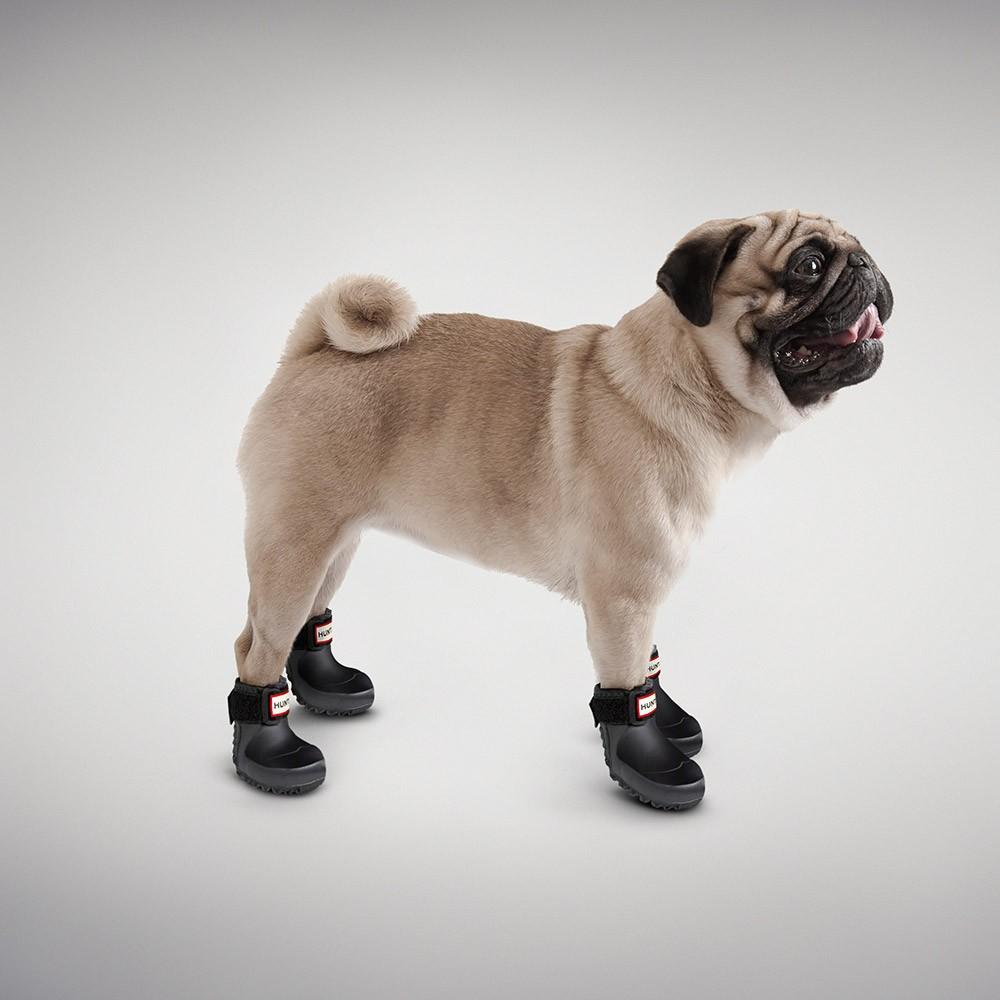 Dog Protective Shoes Uk