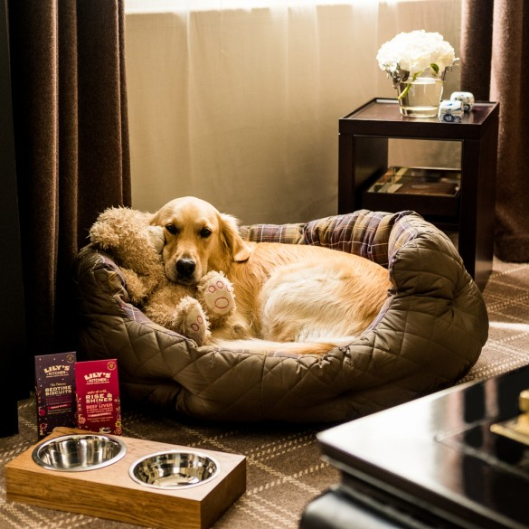 The Uk S Best Dog Friendly Hotels Town Country Magazine Uk